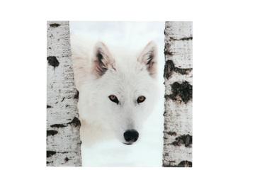 J-line schilderij wolf