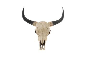 J-line schedel koe