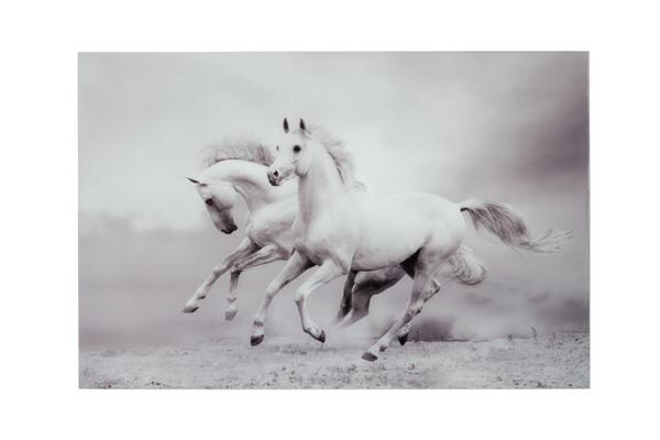 J-line paarden