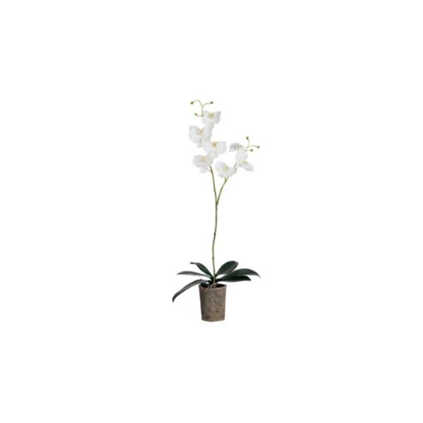 J-line orchidee